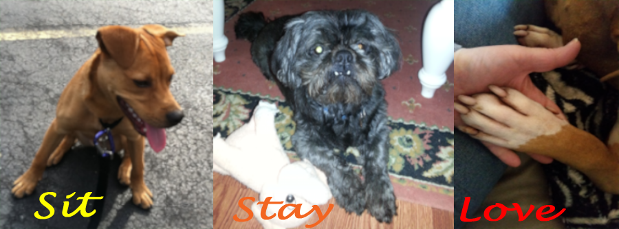 Sit, Stay, Love Dog Training